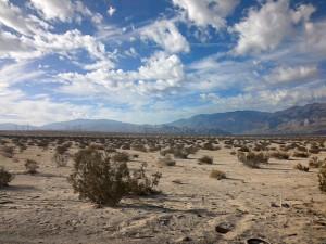 The beauty of the desert.