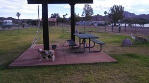 Voted best dog park Earp, CA