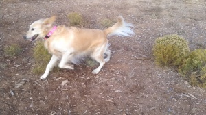 Cyndie Lou They all loved the 1/2 Acre dog park in Santa Fe