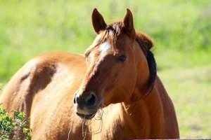 1-Straw horse