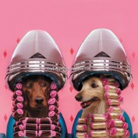 1-5c55627ee3f49dfa467b5efa103ae520--grooming-shop-dog-grooming