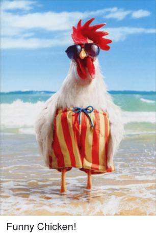 funny-chicken-40369991